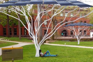Solar Tree in Education